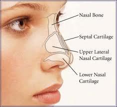 North Carolina Rhinoplasty Facial Plastic Surgeon